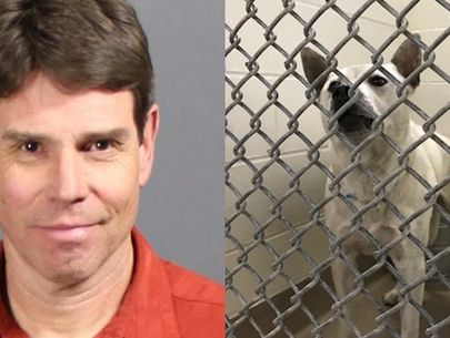 Aurora man sentenced to jail for sex with dog; dog to be euthanized
