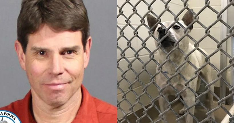 Aurora man sentenced to 6 months in jail for having sex with dog; dog to be euthanized