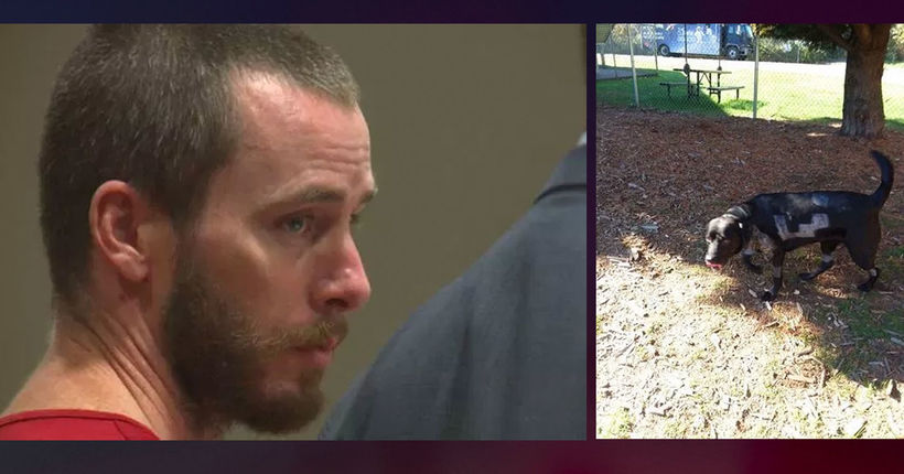 $100,000 arrest warrant issued for man accused of torturing family dog, posting photos