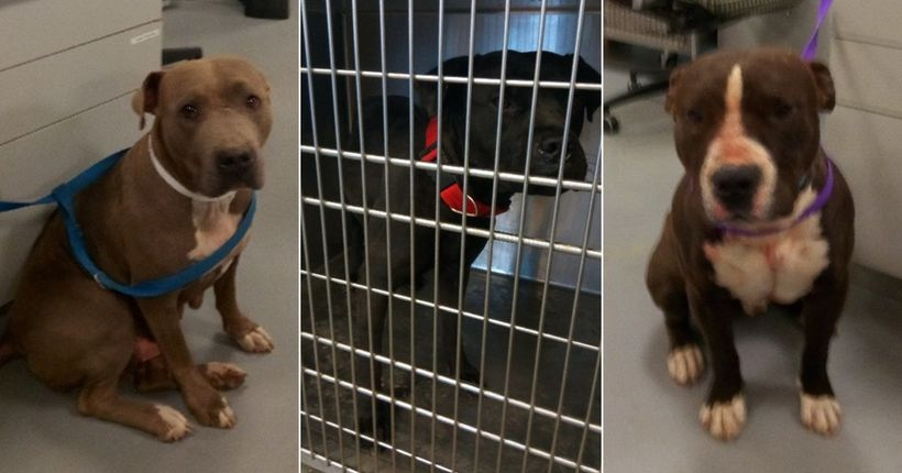 Owner arrested on outstanding warrant after 3 dogs attack woman in California