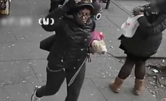 Two women slashed after trying to pet service dog in the Bronx: Police