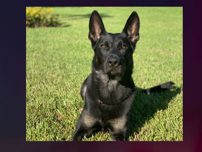 Sheriff's office K-9 killed in shootout at Florida mall