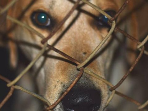 Lawmakers propose bill that would make animal cruelty a felony in the U.S.