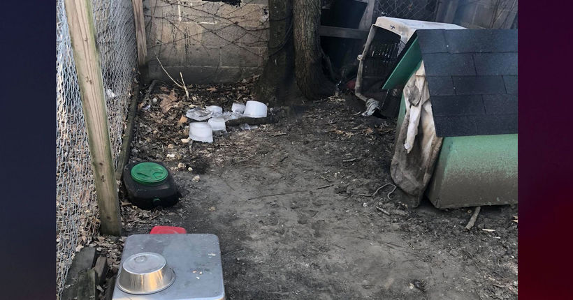 Dog froze to death in doghouse before owner threw it in dumpster