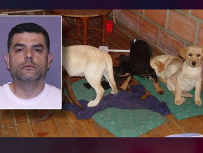 Veterinarian who smuggled heroin in puppies sentenced to 6 years in prison