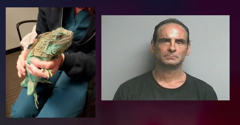 Iguana thrown inside restaurant suffers broken leg; man charged with animal cruelty