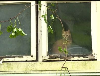 Officials investigating 'beyond horrific' animal cruelty, hoarding situation