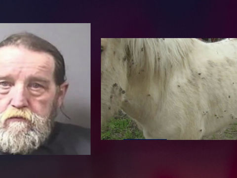 Man accused of letting dead horse decay on property, neglecting 2 others