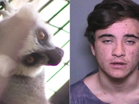 Man charged in burglaries ID'd as suspect in zoo lemur theft: cops