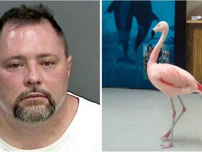 Man accused of killing beloved flamingo dies after getting hit by truck