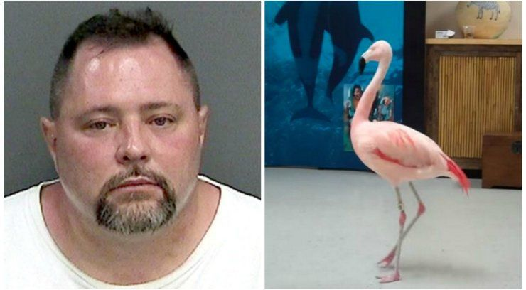 Man accused of killing Pinky the flamingo dies after getting hit by truck