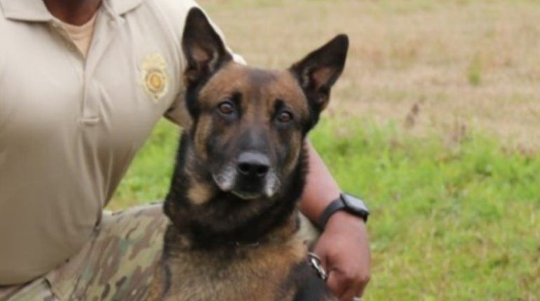 K-9 that sniffed substance during prison sweep dies