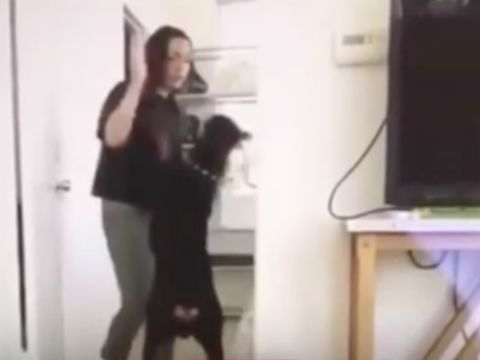 YouTuber investigated after video appears to show her hurting dog