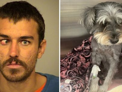 Man accused of kicking beachgoer's dog '15 feet into the air'