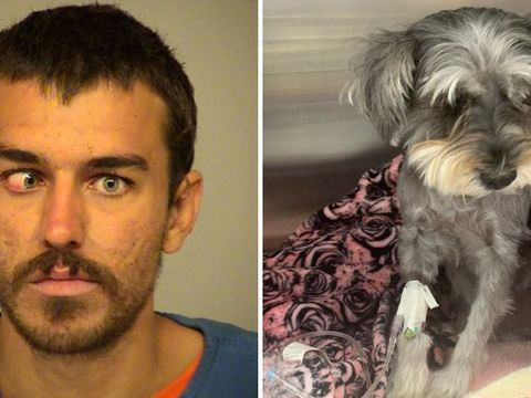Man accused of kicking beachgoer's dog '15 feet into the air'