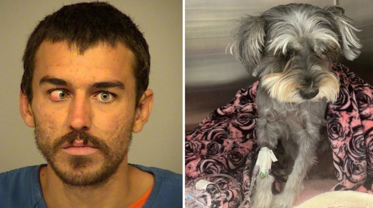 Man arrested on suspicion of kicking beachgoer's dog '15 feet into the air,' trying to punch lifeguards in Port Hueneme