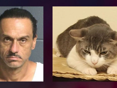 New Mexico man accused of force-feeding meth to his cat