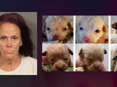 Woman admits to dumping 7 puppies in trash, is sentenced to 365 days