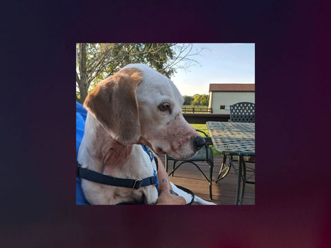 Sheriff: Owner made up story of abused dog to get free care for pet