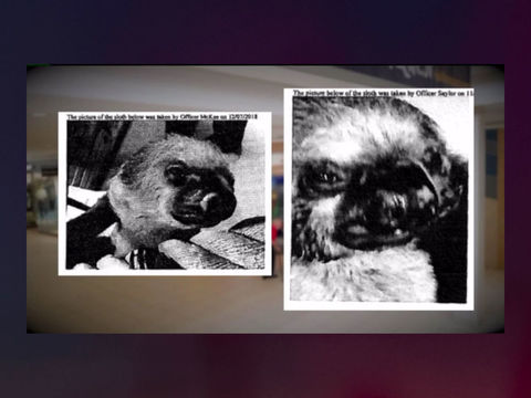 Animal cruelty trial begins for manager after sloth burned at SeaQuest