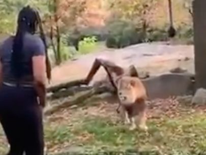 Video shows woman seemingly entering restricted lion area at zoo