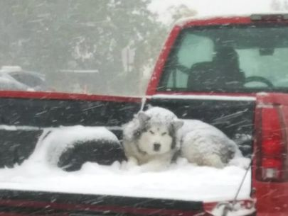 Pic of dog in open pickup bed could be considered animal cruelty: officials