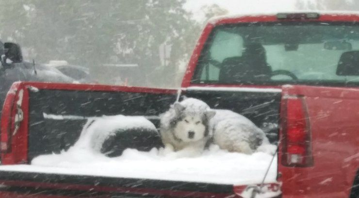 Photo of dog in open pickup bed goes viral, could be considered animal cruelty, Colorado officials say