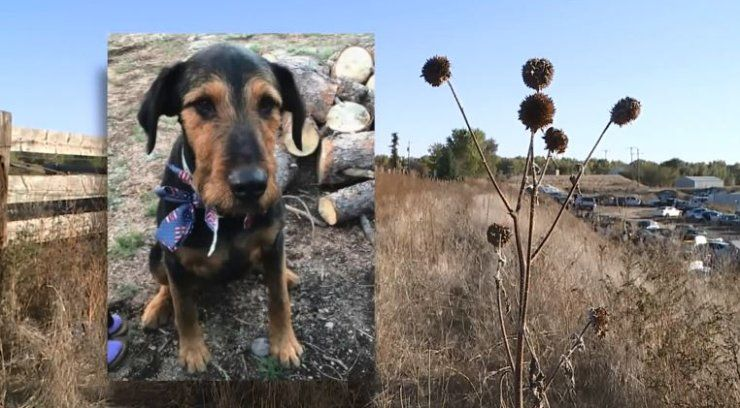 Missing dog reportedly found beaten to death