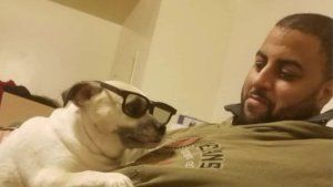 Arrest in stray-bullet killing of Harlem man walking dog
