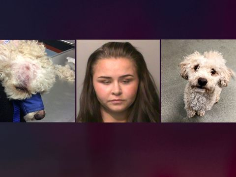 Iowa woman pleads guilty in 'brazen and brutal' beating of dog