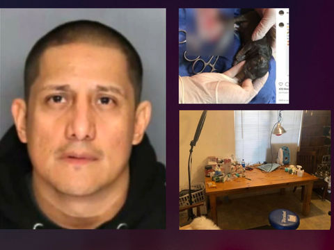 Suspect performed dog surgeries to increase litters: Officials