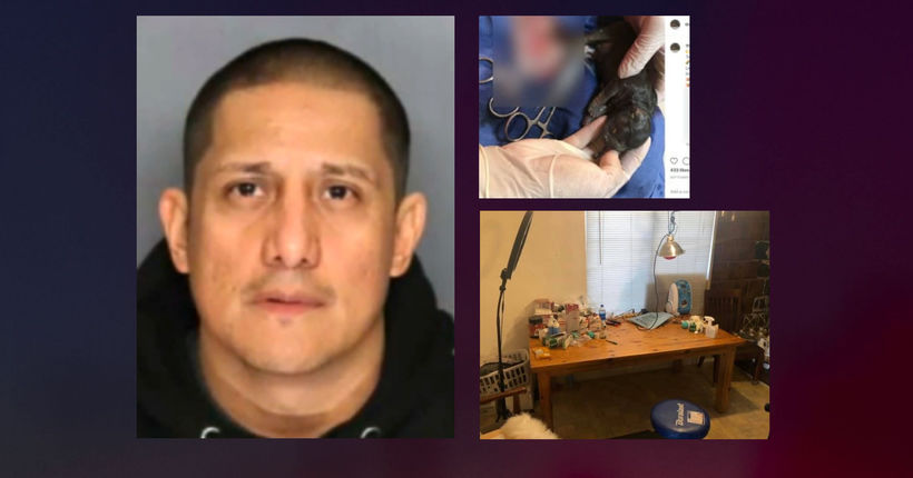 Suspect performed kitchen-table dog surgeries to increase litters: Officials