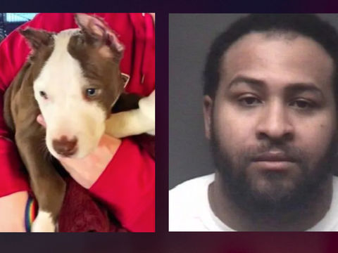 Puppy's ears cut off with scissors, superglued back on, N.C. police say