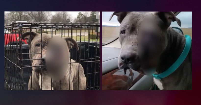 Reward offered in fatal shooting of Arkansas dog
