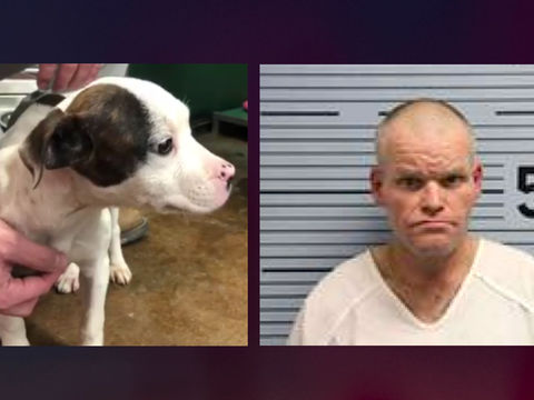 Man accused of hanging puppy from tree in Alabama