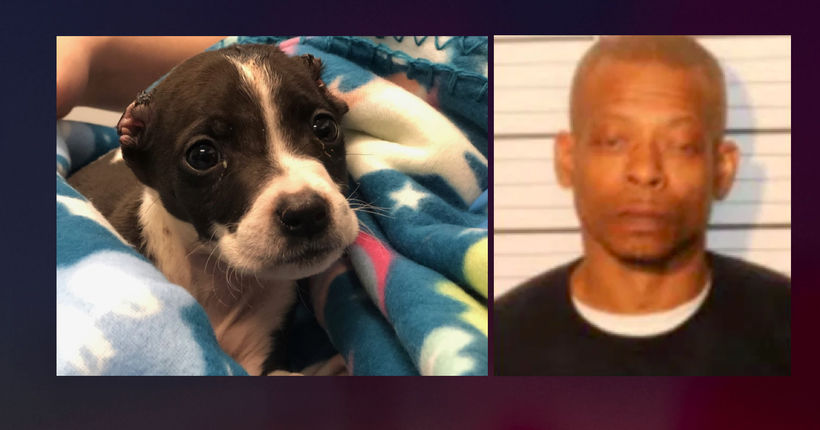 Memphis man arrested for cutting puppy's ears off with scissors