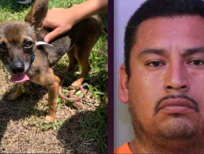 Florida man accused of strangling dog, tossing it in bushes