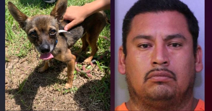 Florida man accused of strangling dog, tossing it in bushes; dog survives