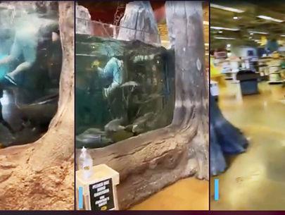 Bass Pro Shop aquarium-swimmer suspect caught, police say