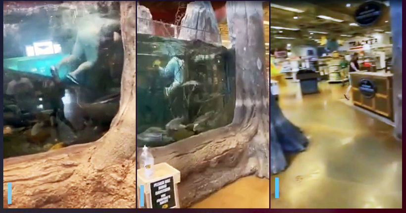 Louisiana Bass Pro Shop aquarium-swimmer suspect caught, police say