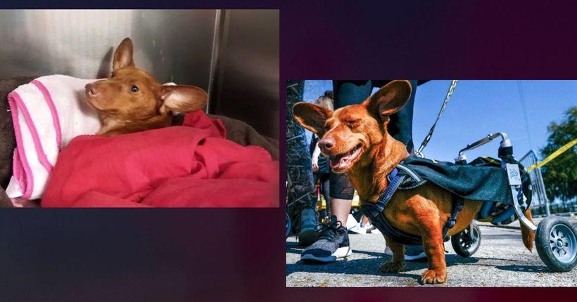 Louisiana woman sentenced in animal-cruelty case