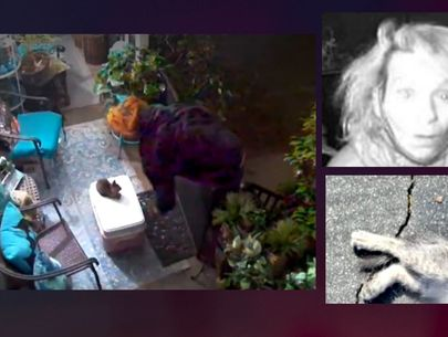 Woman arrested for allegedly stealing, killing kitten in Los Angeles