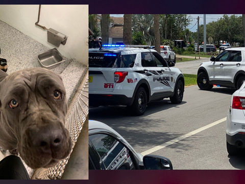 Florida dog euthanized after owner killed neighbors in dispute