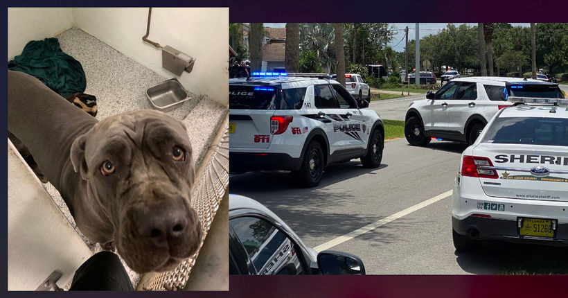 Florida dog euthanized after owner who killed neighbors died in police shootout