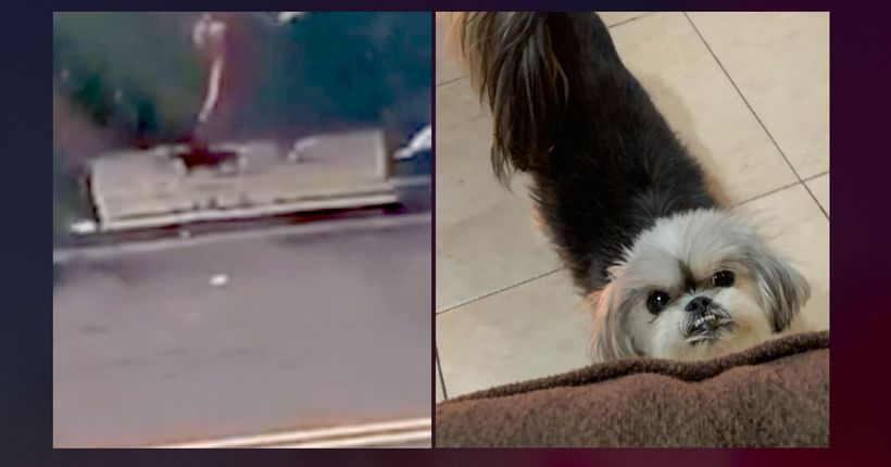 Woman swipes beloved family dog from car parked in Canarsie in heartless robbery